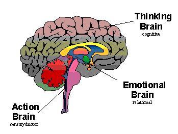 triuni brain