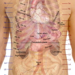 anatomia dei punti sensbili